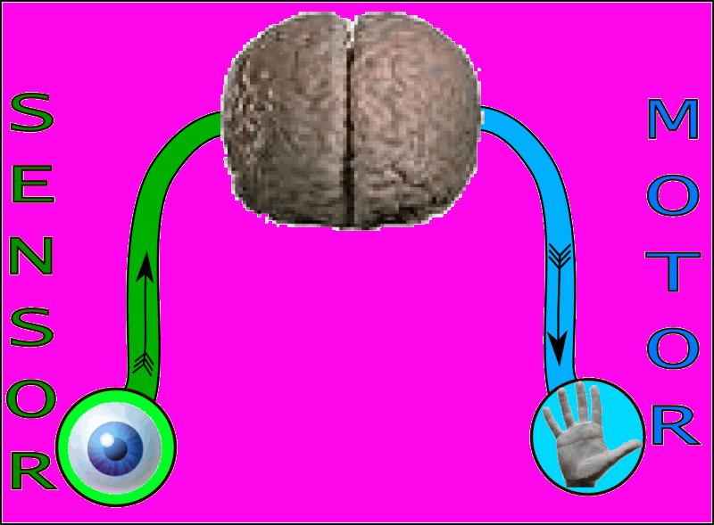 Welches Image Hat Sensory Intelligence Bewertungen