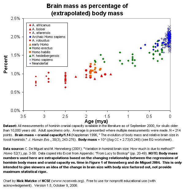 brain mass as a percent of body mass against time